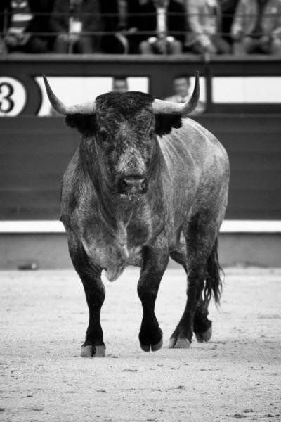 Que reste-il du Toro Bravo…